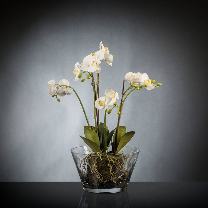Aranjament floral elegant PHALENOPSIS CLUMP, Aranjamente florale LUX, Corpuri de iluminat, lustre, aplice, veioze, lampadare, plafoniere. Mobilier si decoratiuni, oglinzi, scaune, fotolii. Oferte speciale iluminat interior si exterior. Livram in toata tara.  a