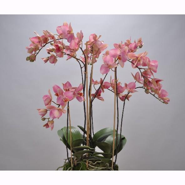 Aranjament floral deosebit ORCHID O/SOIL RED 75cm 113674 SK, Aranjamente florale LUX, Corpuri de iluminat, lustre, aplice, veioze, lampadare, plafoniere. Mobilier si decoratiuni, oglinzi, scaune, fotolii. Oferte speciale iluminat interior si exterior. Livram in toata tara.  a