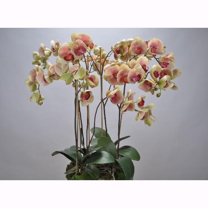 Aranjament floral deosebit ORCHID O/SOIL PINK 83cm 113682 SK, Aranjamente florale LUX, Corpuri de iluminat, lustre, aplice, veioze, lampadare, plafoniere. Mobilier si decoratiuni, oglinzi, scaune, fotolii. Oferte speciale iluminat interior si exterior. Livram in toata tara.  a