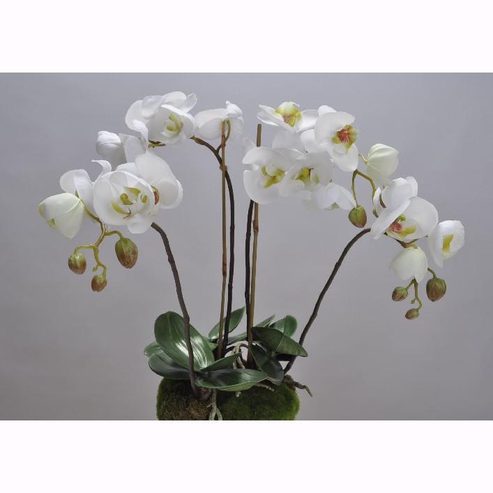 Aranjament floral deosebit ORCHID O/SOIL WHITE 48cm 113685 SK, Aranjamente florale LUX, Corpuri de iluminat, lustre, aplice, veioze, lampadare, plafoniere. Mobilier si decoratiuni, oglinzi, scaune, fotolii. Oferte speciale iluminat interior si exterior. Livram in toata tara.  a