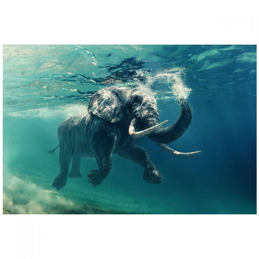 Tablou decorativ, imagine imprimata pe sticla calita ELEPHANT 120x80cm, Tablouri decorative,  a