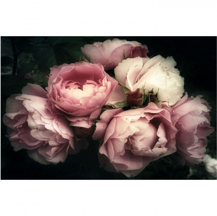 Tablou decorativ, imagine imprimata pe sticla calita FLOWERS I 120x80cm, Tablouri decorative,  a